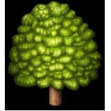 Emoji Natur-80
